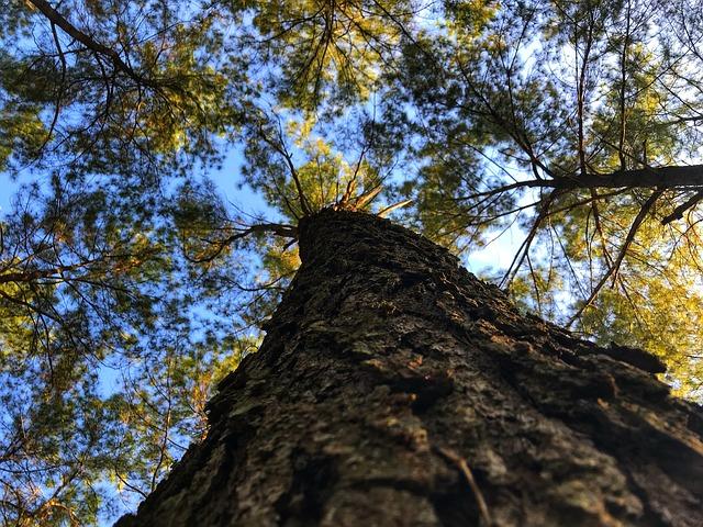 kmen stromu